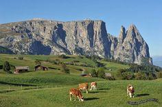 """Il """"Gigante Sciliar"""", Alpe Siusi, Ortisei, Bolzano"""