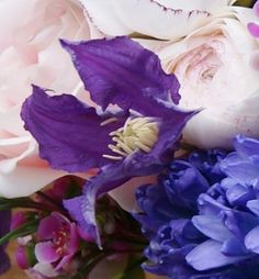 Florissimo - Flowers for weddings and events in Shropshire. CLEMATIS. From Florissimo Flower Directory at https://uk.pinterest.com/ByFlorissimo/flower-directory/ | Purple