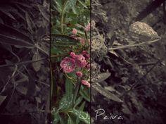 J. Paiva Photography