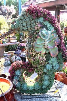 A seahorse topiary, with magenta Crassula schmidtii and a fin of Kalanchoe 'Fantastic'. Terra Sol Garden Center, Santa Barbara