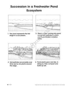 Regents prep living environment laboratory dichotomous keys grade 7 science ecosystem activity sheet ccuart Image collections