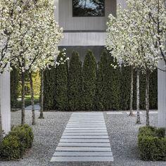 Driveway Trees Design