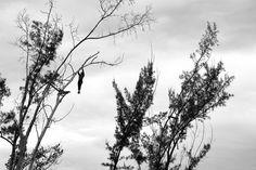 Martin Brent - Tree Divers V on www.eyestorm.com
