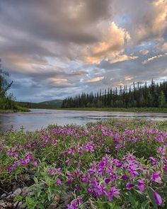 Add a river adventure to your bucketlist! Float down Beaver Creek Wild and Scenic River. With its headwaters in the White Mountains, Beaver Creek is a short 50-mile trip from Fairbanks, Alaska. The river flows west past the jagged limestone ridges of the White Mountains before flowing to the north and east, where it enters the Yukon Flats and joins the Yukon River. It's a long trip and requires a lot of planning, but you won't regret it. Photo by Bob Wick, @mypubliclands.