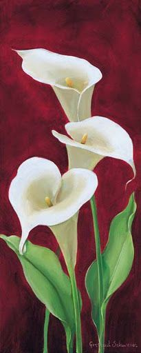 Lovely Calla Lilies | NO PIN LIMITS