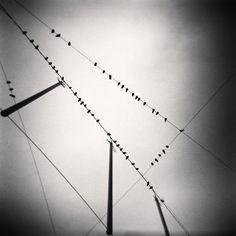 Michael Kenna : Fifty Two Birds, Zurich, Switzerland. 2008