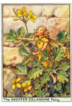 Wayside Fairies:  Greater Celandine Flower Fairy  by Cicely Mary Barker