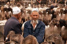 Mercado de ganado de Kashgar. China. Livestock market in Kashgar. China