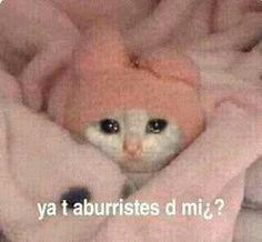 Memes Humor, Cat Memes, Funny Memes, Memes Lindos, Sad Cat, Spanish Memes, Cartoon Memes, Mood Pics, Wholesome Memes