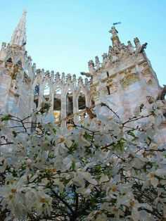 Duomo in total white