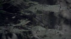Der Tod der Sonne (The Death of the Sun)  Recorded during 2014-2015 in the swamps of Leipzig, Germany Best viewed fullscreen in a dark room. The audio is subtile, it's recommended to use external speakers or headphones. __________  Grabado durante 2014-2015, en los pantanos de Leipzig, Alemania. Ver en habitación oscura, full screen. El audio es leve, se recomienda utilizar parlantes externos o audífonos  Installation photos:  http://nicolasrupcich.com/15-der-tod-der-sonne.php  ...