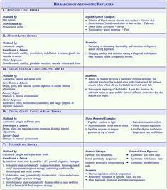 Svetlana Masgutova Educational Institute - Hierarchy of Autonomic Reflexes