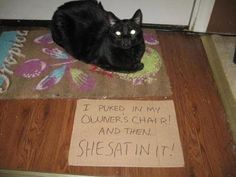 An epic gallery of cat shaming pictures that prove these cats are the naughtiest in the world. A hilarious cat shaming picture gallery. Funny Animal Memes, Cat Memes, Funny Dogs, Funny Animals, Cute Animals, Animal Funnies, I Love Cats, Crazy Cats, Cool Cats