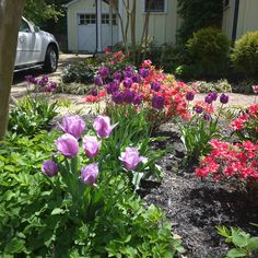 This garden up the road is a riot of color!