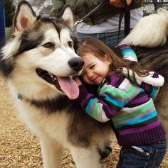 Toddler gugging Husky dog, bigger than she is!