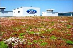 """largest green roof, or """"living roof"""" as Ford calls it, in North America has been flourishing atop the company's Dearborn Truck Plant final assembly building at the Ford Rouge Center for the past ten years."""
