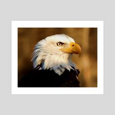 #INPRNT #fine art #print #poster #art Picture Frame Table, Oak Picture Frames, Wooden Picture, Frames On Wall, Wooden Frames, Frame Stand, 10 Frame, Wood Images, Landscape Pictures