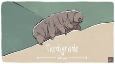 Discover how the Tardigrade has earned its reputation as the toughest animal on Earth. This creature can survive without water, extreme temperature, radiation and more.