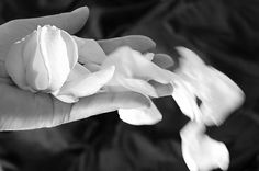 Romantic black and white rose petals. 'When I Dream' photography by Kume Bryant #romance #photographs