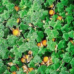 1000 Images About GARDEN PLANTS On Pinterest Plant