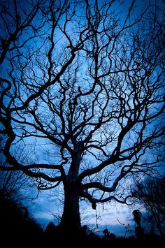 Tree Silhouette, by Andrew Walmsley Photographer