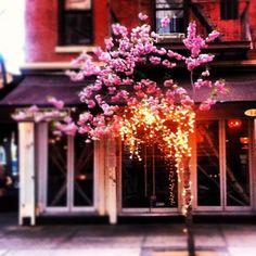 Our neighborhood - Nolita, NYC.