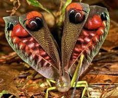 insectos bonitos - Buscar con Google