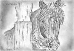 imagen de cavalo crioulo para desenhar - Bing images