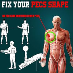 FIX YOUR PEC SHAPE.Is your lower pec undefined or seems to be lacking tone compared to the rest of, it can be because of where your shoulders are. The lower pecs have a distinct line of pull they can become passively insufficient compared to the rest of Fitness Workouts, Pec Workouts, Gym Workouts For Men, Chest Workouts, Chest Exercises, Body Stretches, Lower Chest Workout, Chest Workout Routine, Best Chest Workout