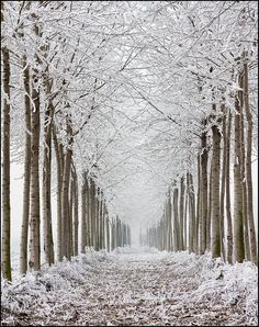 Galaverna - Hoarfrost [Explored] by beppeverge, via Flickr