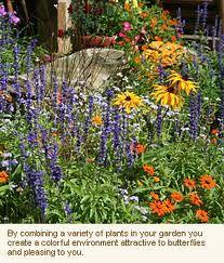 def need a butterfly garden