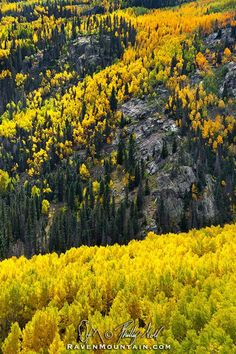 Aspen Glory | by Raven Mountain Images on 500px