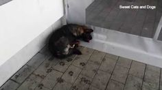 Poor Dog , What Happens is Heart Warming Poor Dog, Funny Animals, Warm, Shit Happens, Dogs, Pet Dogs, Funny Animal, Doggies, Hilarious Animals