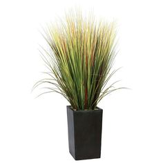 Shop a great selection of Laura Ashley 60 Inch Tall High End Realistic Silk Grass Floor Plant Contemporary Planter. Find new offer and Similar products for Laura Ashley 60 Inch Tall High End Realistic Silk Grass Floor Plant Contemporary Planter. Silk Plants, Fake Plants, Plants Indoor, Outdoor Plants, Outdoor Spaces, Artificial Turf, Artificial Plants, Cool Ideas, Faux Succulents