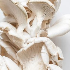 I love the softness and intricate texture of mushrooms, especially oyster mushrooms. . I wish these were for mushroom duxelle - an…
