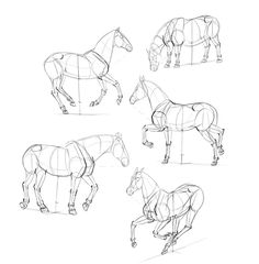 How to Draw Horses: Step-by-Step with Monika Zagrobelna Read all about it at www. - step by step - Pferde Horse Drawings, Animal Drawings, Art Drawings, Drawing Animals, Drawing Art, Pencil Drawings, Animal Sketches, Drawing Sketches, Horse Drawing Tutorial