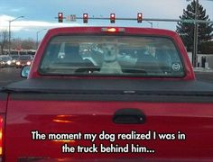 Funny Animal Pictures Of The Day – 28 Pics #dogsfunnypictures