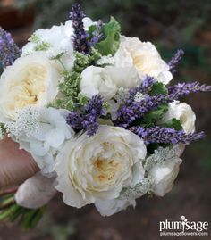 Patience garden roses, queen Anns lace, lisianthus and lavender by Plum Sage Flowers