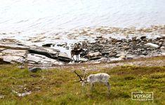 Norvège en camping-car : récit d'1 mois de road-trip Destinations, Camping Car, Blog Voyage, Road Trip, Norway, Mountains, Nature, Travel, 1 Month