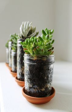 Mason Jar Planters with drainage - set of 5 - UpCycled Jelly Jar and Terra Cotta Saucer Plates - BootsNGus Home and Garden Glass Pots. via Etsy.