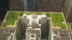 Demostrada la eficiencia de las cubiertas verdes. #techosverdes