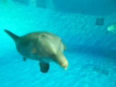Indianapolis Zoo - Indianapolis, IN - Kid friendly activity reviews - Trekaroo