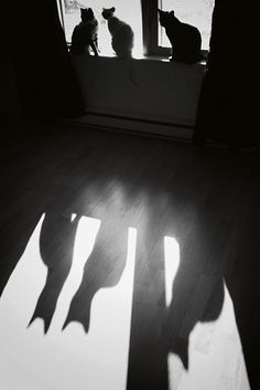 Cats in the window - feline shadows & light.  Trois P'tits Chats (Three Little Cats), photography by Michel Feugeas