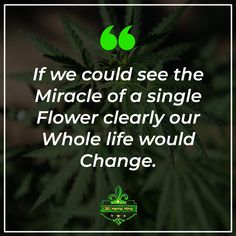 Cannabidiol, also known as CBD, is an amazing compound derived from the hemp plant. This miracle isolate has no psychoactive effects, meaning it doesn't get you high, but it does have many calming and mood enhancing properties. Calming, Hemp, Drugs, Meant To Be, Plant, King, Mood, Amazing, Plants