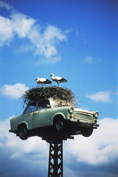 Storks are opportunists. They grab every opportunity to build their nest