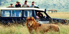 Consejos para realizar un safari fotográfico en Kenia