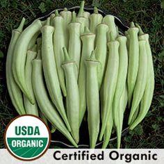 Okra Jing Orange 20 FRESH Seeds Organic  Tasty Heirloom