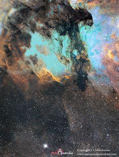 A Nebulosa do Pelicano fica a 2.000 anos-luz de distância de nós, na constelação do Cisne. Ela é rica em formação de estrelas.