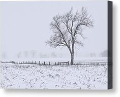 - Winter Field Canvas Print by Garvin Hunter Black And White Canvas, Black And White Prints, Canvas Art For Sale, Canvas Art Prints, Winter, Outdoor, Design, Winter Time, Outdoors