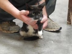 Katie - URGENT - PIKE COUNTY ANIMAL SHELTER in Pikeville, Kentucky - ADOPT OR FOSTER - Adult Female Domestic SH Mix
